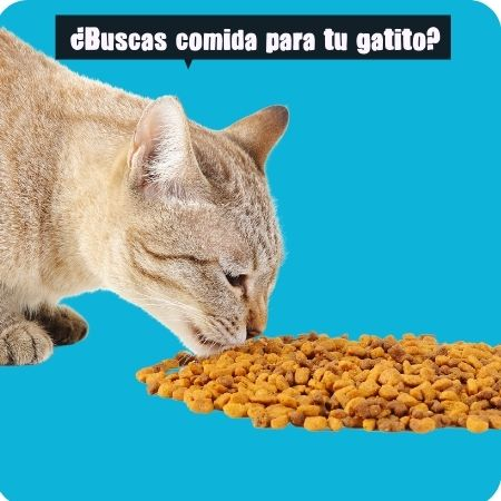 Alimento Felino